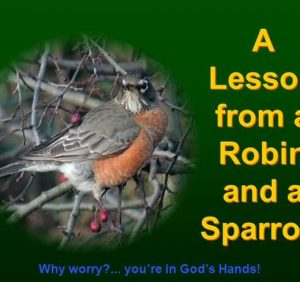 Said the Robin to the Sparrow..!