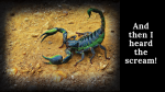 The Scorpion..!