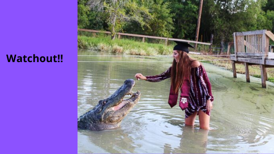 Camouflaged Alligators..!