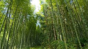 Stand Tall Like The Bamboo..!