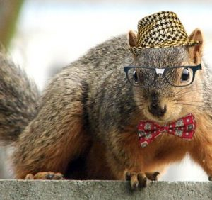 A Squirrel Wearing Glasses..!
