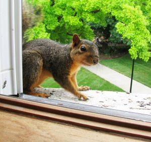Noise Outside my Window..!