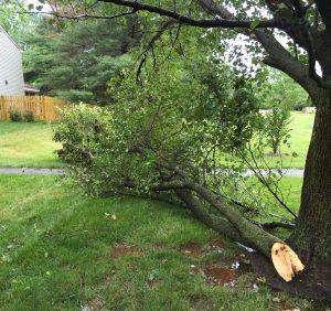 Broken Branch..!